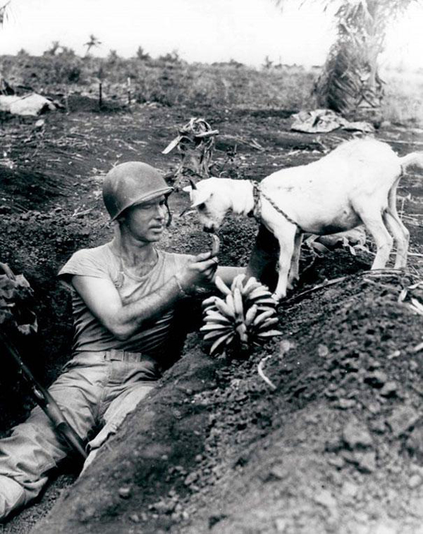 16.) A soldier shares his banana with a goat during the battle of Saipan ca 1944.